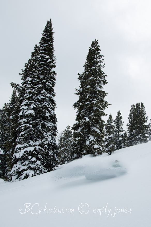 Deep snow below treeline